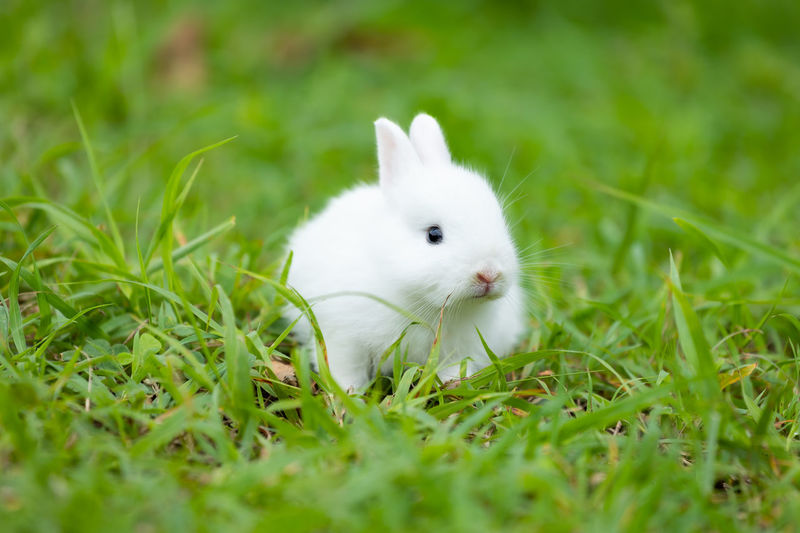 White cat lying on grass