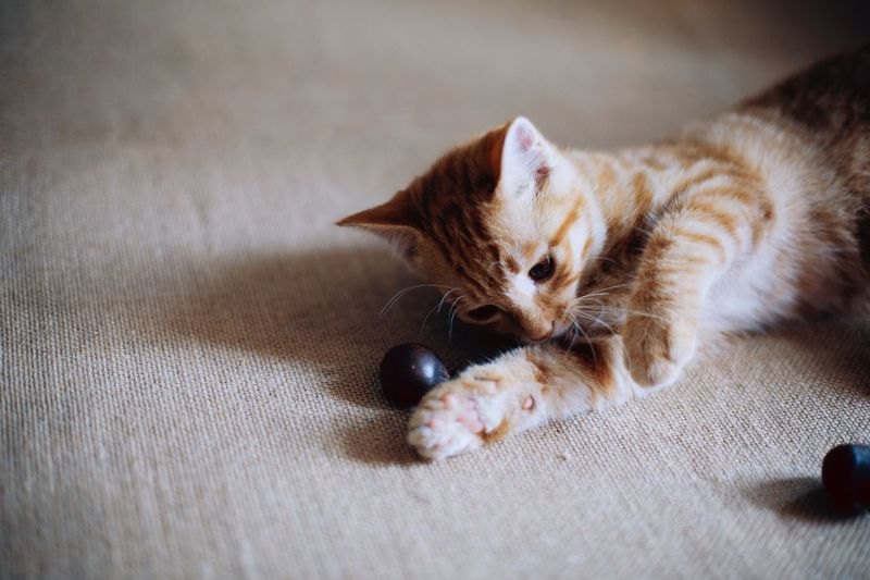 🐱cat Cat Animal