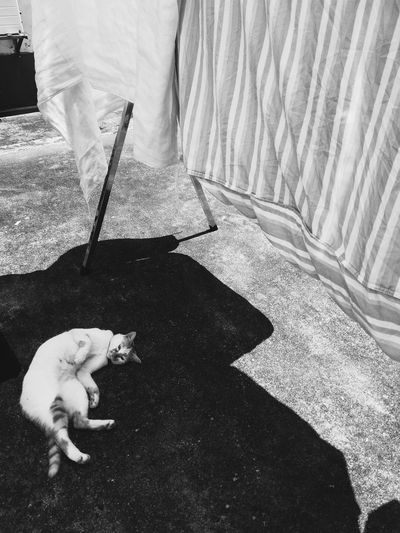 Pets Sunlight One Animal Vscocam Sunshine Animal Themes Outdoors Cat Lying Down Resting Leisure Activity Sunlight Shadow Blackandwhite