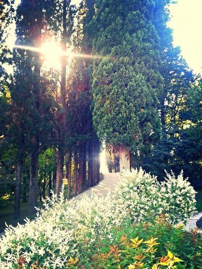 Sunbathing Hugging A Tree Livenearyou Park