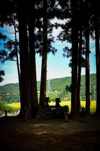 なんだか妙に惹かれる。 Shrine Shinto Shrine Tree Plant Tree Trunk Trunk Land Nature Tranquility Growth Landscape Sky Tranquil Scene Beauty In Nature Environment Scenics - Nature No People Day Silhouette Forest Outdoors