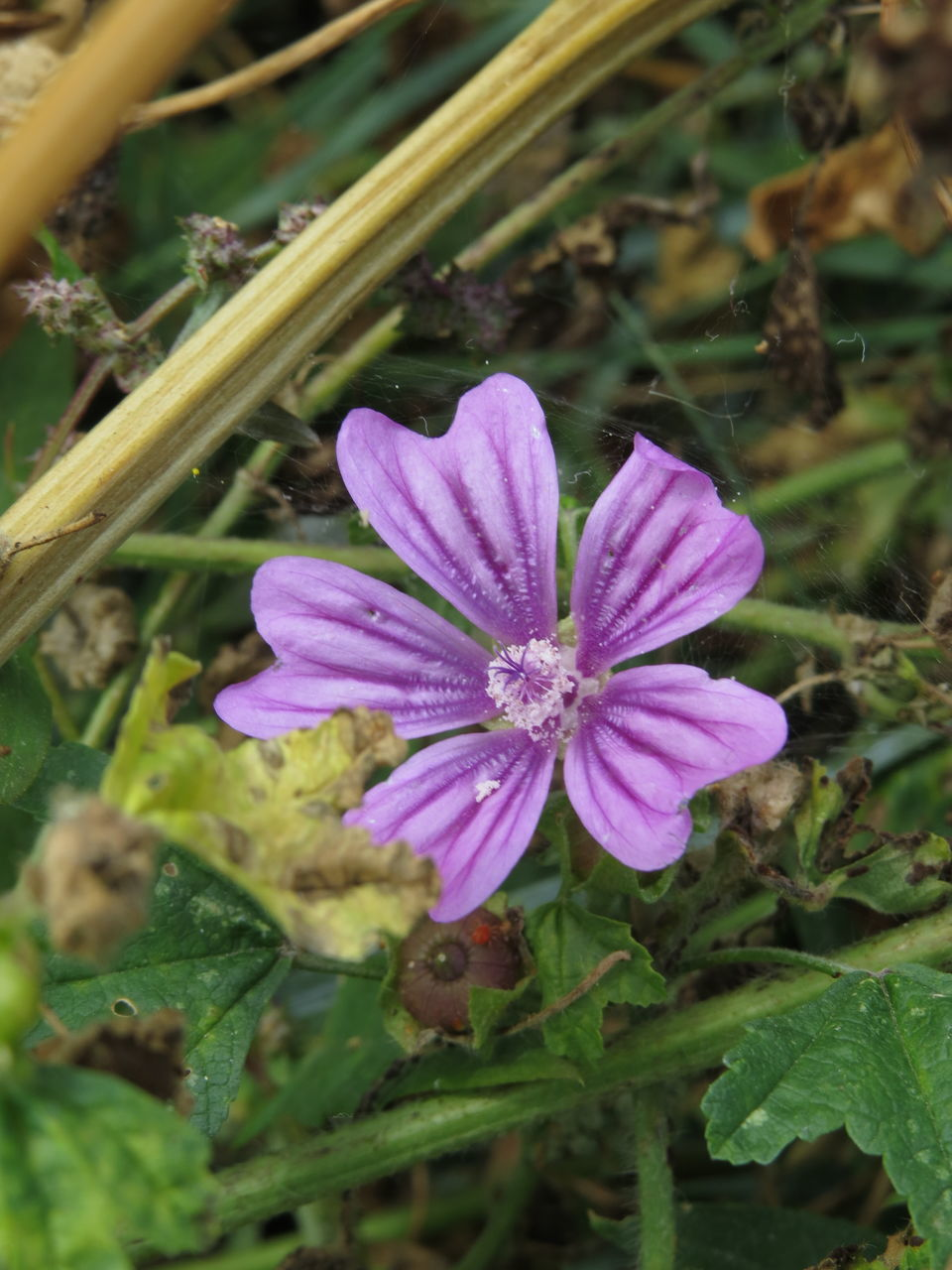 CLOSE-UP OF PURPLE FLOWERS