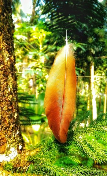 Beauty in Nature-Feather EyeEm Best Shots EyeEm Nature Lover EyeEm Selects EyeEm Gallery EyeEm Feather  Feathers Feathers Of A Bird Feather_perfection Tree Water Hanging Close-up