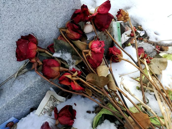 Cemetery Photography Cemetary Shots Cold Temperature Snow Covered Gravestone Gravestone Photography Faded Flower Faded Roses Love Is Forever Last Farewell Red Roses Signs Of Love Melancholy Sadness Flowers
