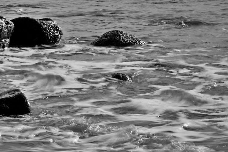 longterm Water Waterfront Sea Swimming Motion Day Nature Rippled Animals In The Wild No People Outdoors Wave Animal Wildlife Underwater Mammal B&w LongTerm