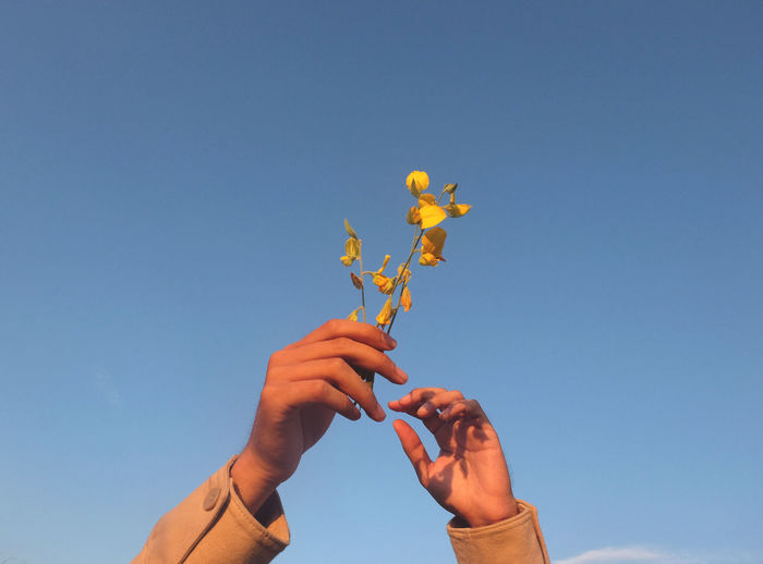 Low angle view of woman hands holding flowers against clear blue sky
