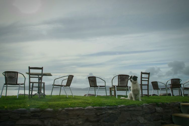 Sky No People Outdoors Cloud - Sky Landscape Water Nature Dog Animals Animal Themes Animals In The Wild Tranquility Tranquil Scene Waiting Waiting For You Ireland Landscapes Ireland Chairs Beautiful Organized