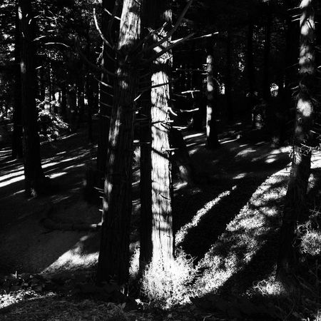 Creative Light And Shadow Monochrome Black And White Nature