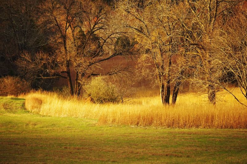 Will you stay with me... among the fields of gold? Golden Field Fields Nature Eyeemnaturelover Historic Virginia Battlefield Manassas National Battlefield Park