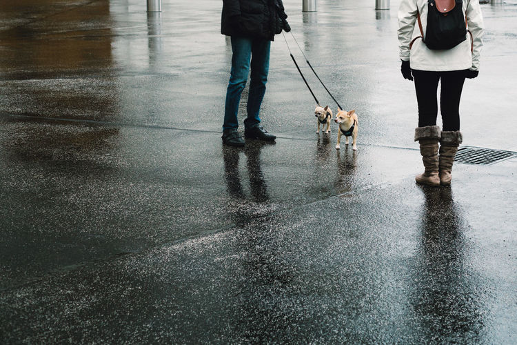 Low Section Of Woman With Dogs Walking On Wet Street