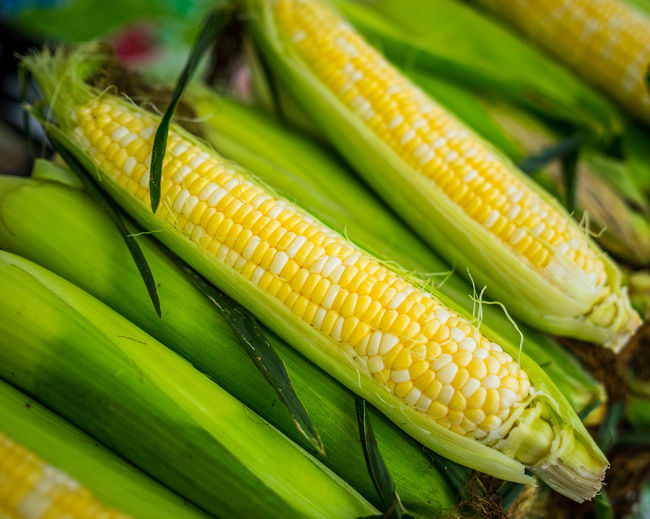 Agriculture Close-up Corn Corn On The Cob Day Focus On Foreground Food Food And Drink Freshness Green Color Healthy Eating High Angle View No People Outdoors Raw Food Still Life Sweetcorn Vegetable Vegetarian Food Wellbeing Yellow
