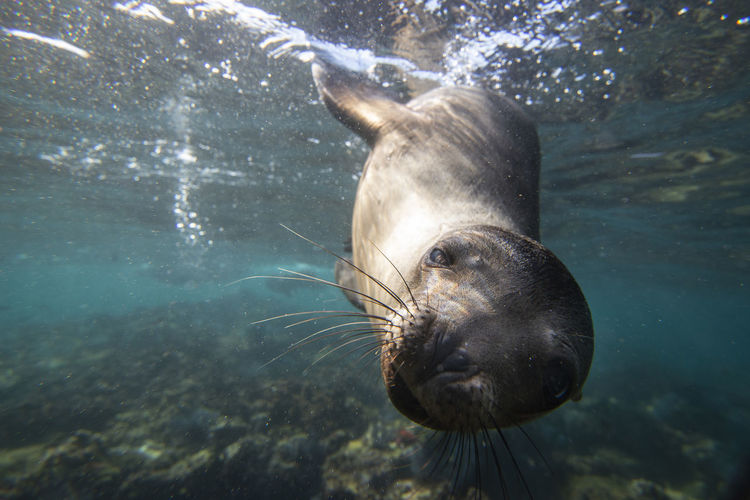Close-up of sea lion swimming