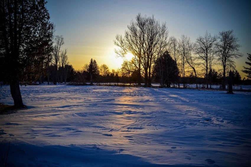 Winter Cold Temperature Snow Tree Bare Tree Nature Weather Beauty In Nature Sunset No People Sky Scenics Frozen Tranquil Scene Tranquility Outdoors Snow Covered Cold Day