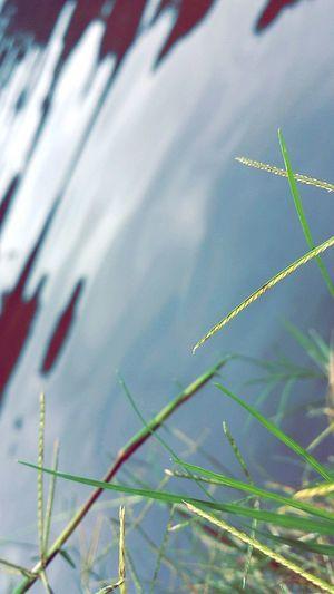 Water Grass n Air