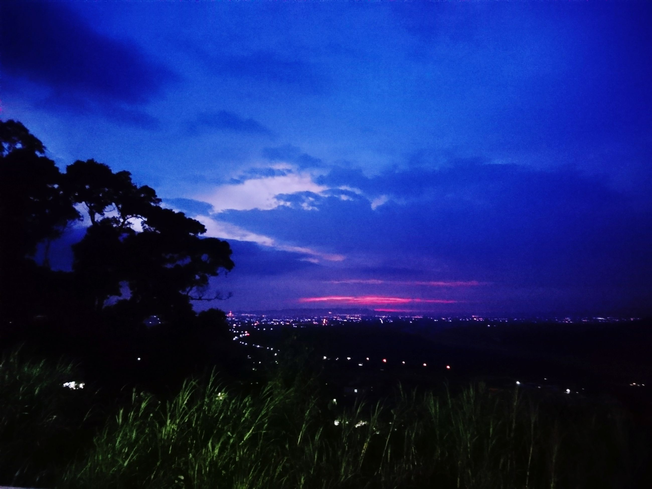 nature, growth, landscape, beauty in nature, sky, no people, blue, night, scenics, grass, outdoors, tree
