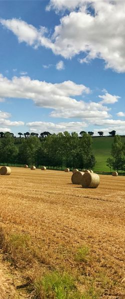 Brittany France Agriculture Animal Themes Bale  Beauty In Nature Cloud - Sky Day Domestic Animals Field Grass Hay Bale Landscape Mammal Maël-carhaix Nature No People Outdoors Rural Scene Scenics Sky Tranquil Scene Tranquility Tree Vertical Panorama