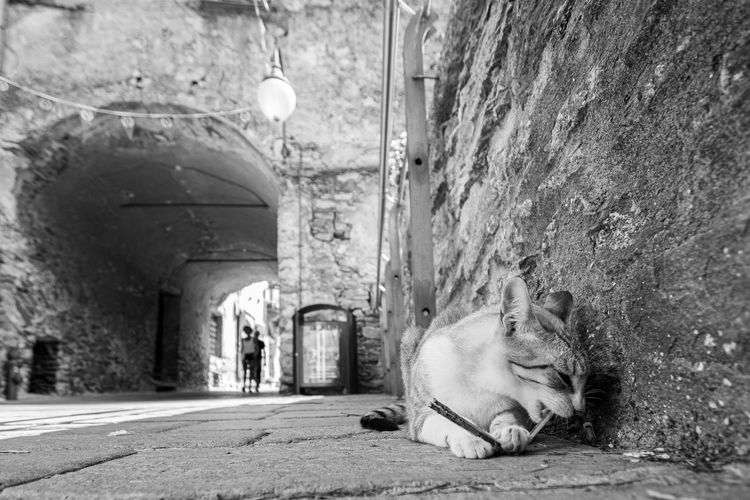 Cat sleeping on wall in alley