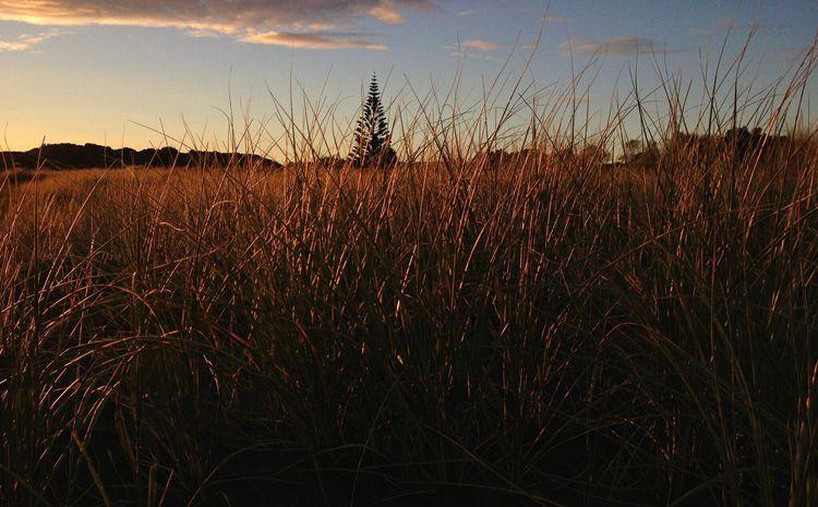 Raglan Nz Sunrise Beach Grass IPhoneography Creative Light And Shadow Summer Views