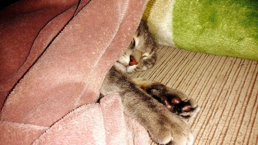 Cat Goodnight Frio ⛄❄ Felicia