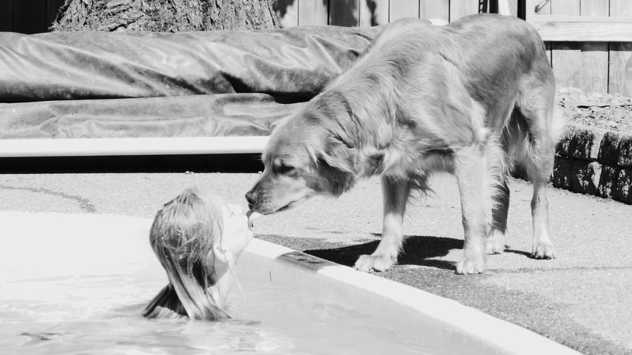 Getty Premium Collection EyeEm Selects Animal Themes Domestic Animals Black & White Photography Summer ☀ Black And White Photography Swimming Pool Hot Weather Summertime Childhood Leisure Activity One Person Lifestyles Summer Vacation Water Swimsuit Kissing Kiss Golden Retriever Pets Day One Animal Dog Outdoors Girl Kisses Dog