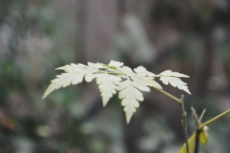 Leaf Plant Nature Winter No People Pinaceae Day Close-up Outdoors Flower Beauty In Nature Fragility Cold Temperature Be. Ready. EyeEmNewHere Crafted Beauty