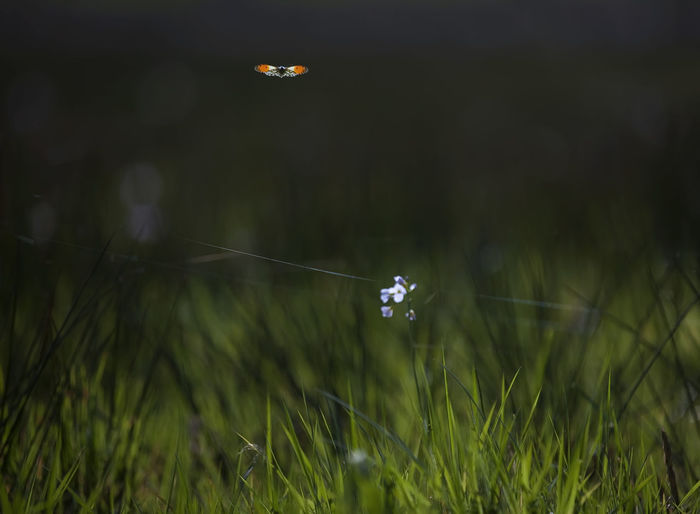 Close-up of ladybug on grass in field