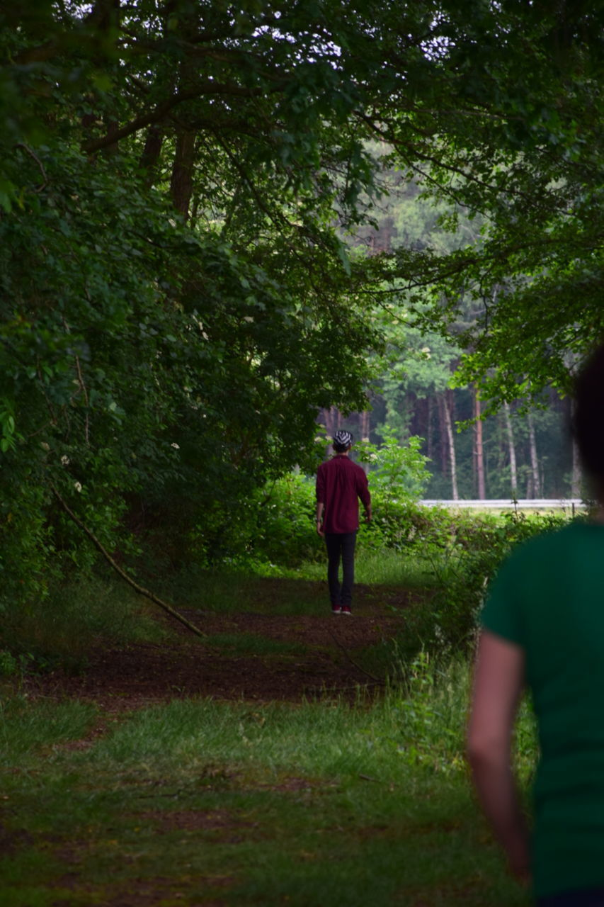 tree, rear view, walking, nature, real people, growth, two people, men, outdoors, standing, forest, full length, grass, day, people