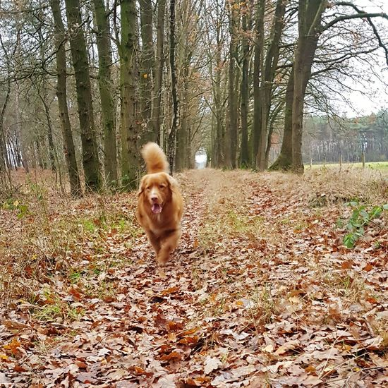 Tree Pets Dog Happiness Smiling Looking At Camera Portrait Fun Autumn