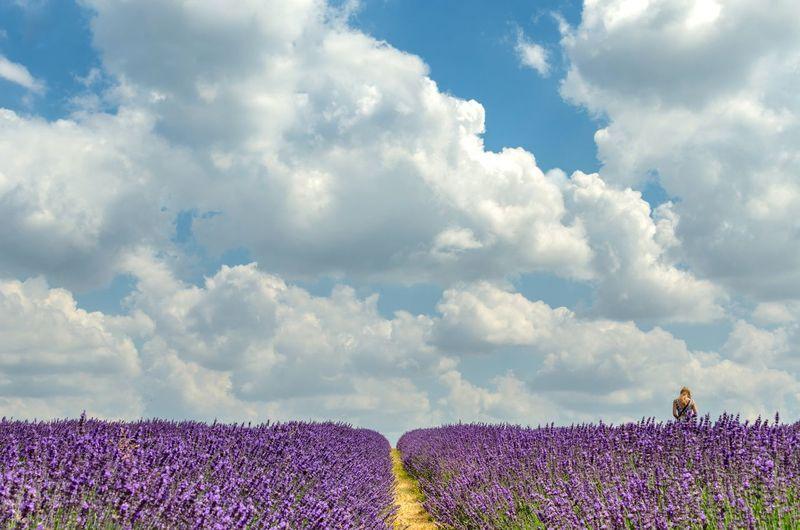 Lavender Field Against Sky