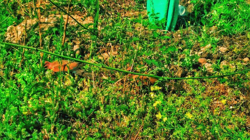 Green Color Growth Nature Grass No People Outdoors Day Full Frame Beauty In Nature Backgrounds Cairo Egypt Cairobeauty Cairo Streets Beauty In Nature Egyptian Art This Is Egypt ❤ City Nature Photogtaphyinmotion Egyptbyme