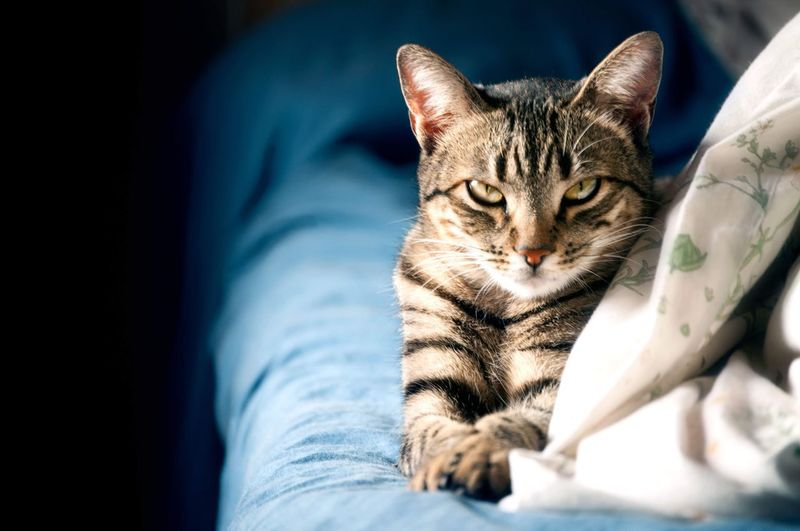 Y tú que miras? Looking Looking At Camera Pets Cat Mammal Feline Domestic Animals One Animal Domestic Domestic Cat Vertebrate Indoors  Bed Home Interior Whisker Close-up