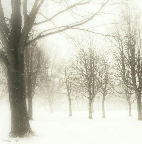 snow fog Trees
