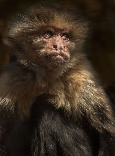 Monkey San Antonio Texas Primate Mammal Animal Wildlife One Animal Animals In The Wild Vertebrate Animal Hair Looking Portrait No People Hair Close-up Looking At Camera Ape Focus On Foreground Capture Tomorrow