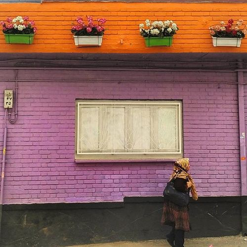 ایران تهران تهرانگردی کوچه رنگ رنگی پیاده پیاده_رو پنجره گلدان دیوار دیوارصورتی کوچه_نفر Iran Iranpics Tehran Tehranpic Streetlife Alley Colorfull Colorfullalley Pinkwall Pink Flowerpot Flowers woman