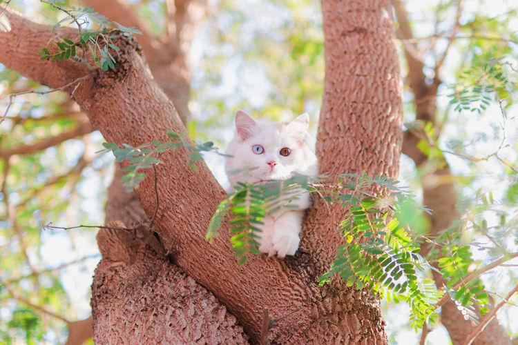 Cattie Tree