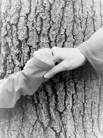 Close-up of woman hand holding tree trunk