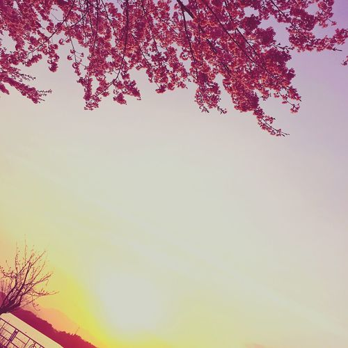 桜と夕暮れ Cherry Blossoms Tadaa Community Sunset Lovely Weather April 2016