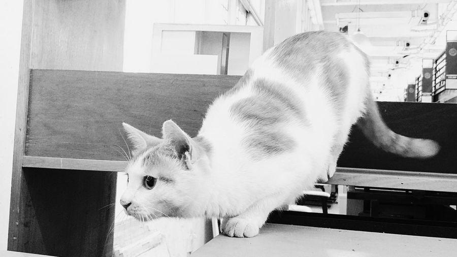 University Campus Cat♡ Cats 🐱 Black & White Black And White Photography China.