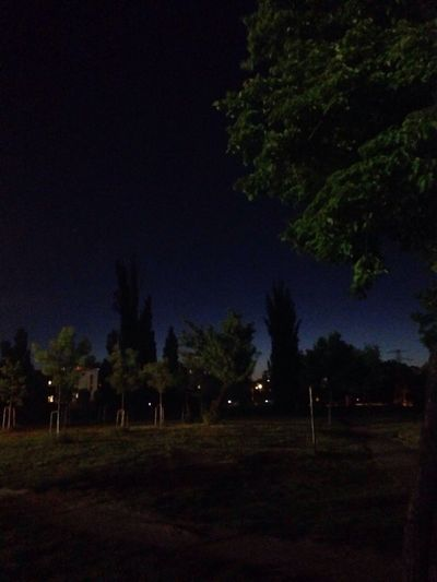 Trees on field at night