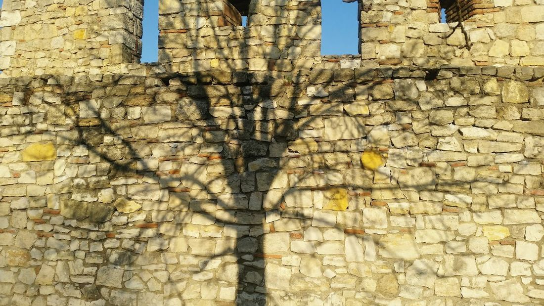 Shadow Tree Backgrounds Full Frame Textured  Sunlight Close-up Architecture