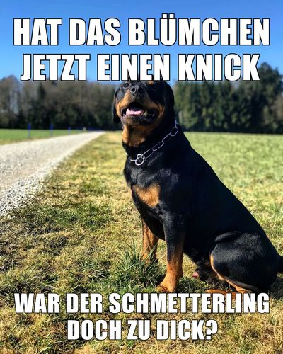 Rottweilerlife Dogslife Instadog Dogs Of EyeEm Dog Rottweilerlove Rottweiler Text Western Script Dog Communication One Animal Capital Letter Day Outdoors Grass Domestic Animals Pets Black Color No People Mammal Nature Animal Themes