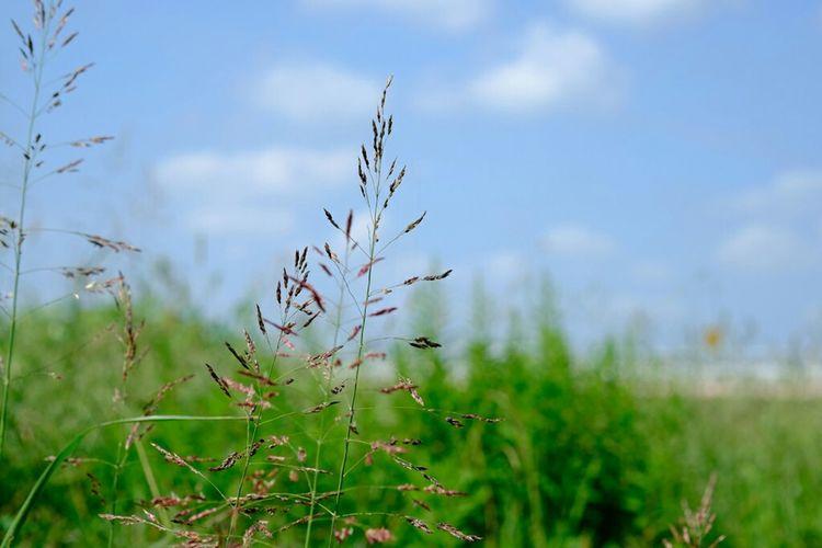 草花 草花 市川 江戸川 Fujixe2 Fujifilm X-E2 Fujifilm_xseries Fujifilm Nature Walking Around Grass
