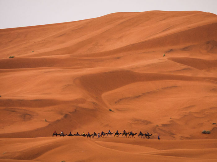 Large Group Of People Riding Camels Through The Desert