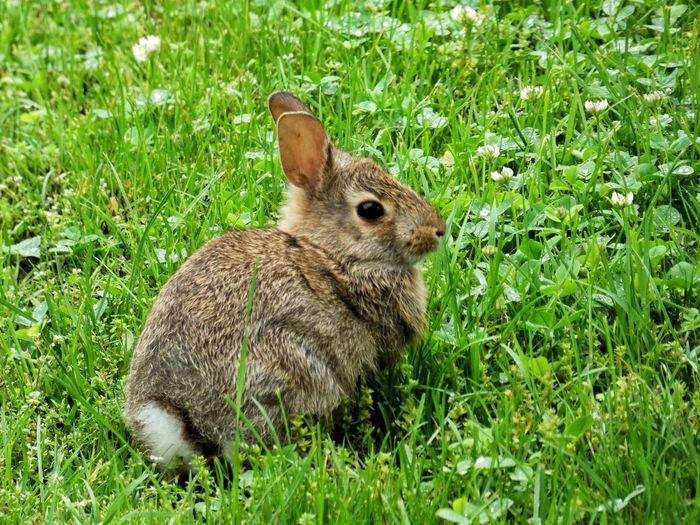 Panasonic Lumix DMC-FZ80 Plant Grass Green Color Animal Wildlife Rabbit - Animal