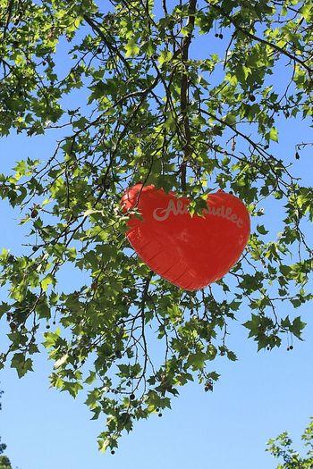 Ballon Love Red Tree Green Leaves Blue Sky