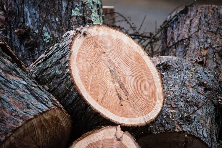 Timber Log Lumber Industry Tree Ring Wood - Material Deforestation Cross Section Tree Tree Trunk Tree Stump Stack Outdoors No People Day Nature Close-up