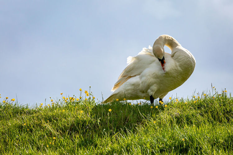 Low angle view of seagull on field against sky