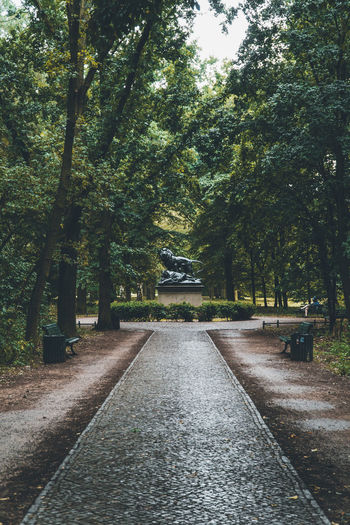 Empty road amidst trees in park