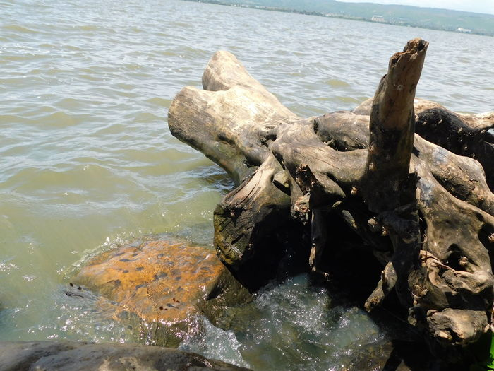 Tree Stump No People Outdoors Lake Waters Lakeshore