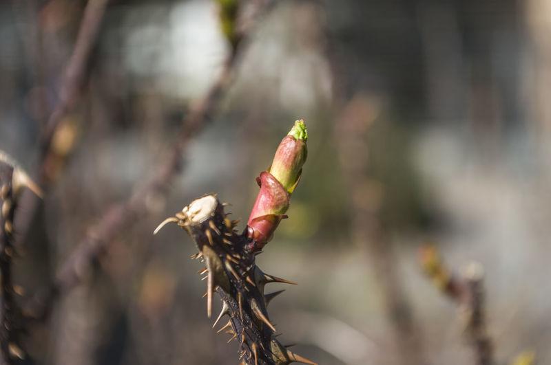 Close-up of bud on stem